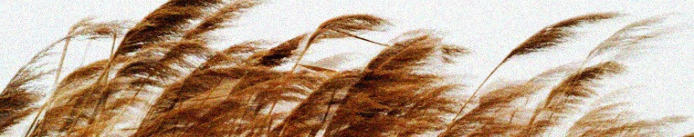 reedsinthewind2_long.jpg
