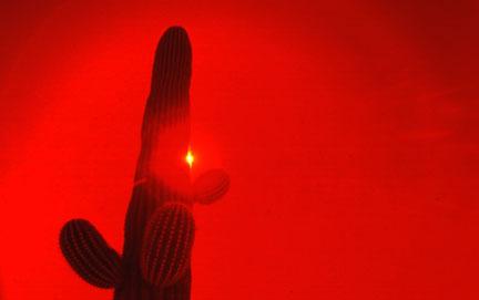 AZ Red Cactus