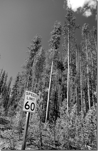 20110625_Scout50Ride_110_BW